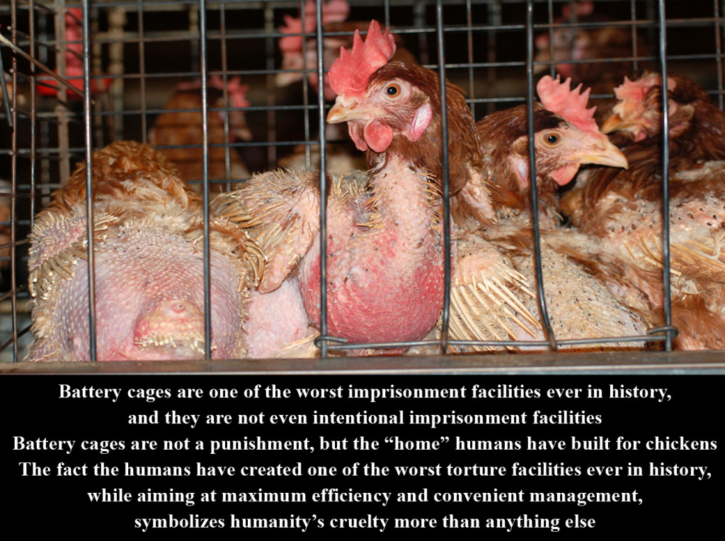Battery_Cages