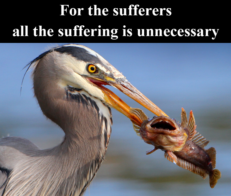All_the_suffering_is-unnecessary