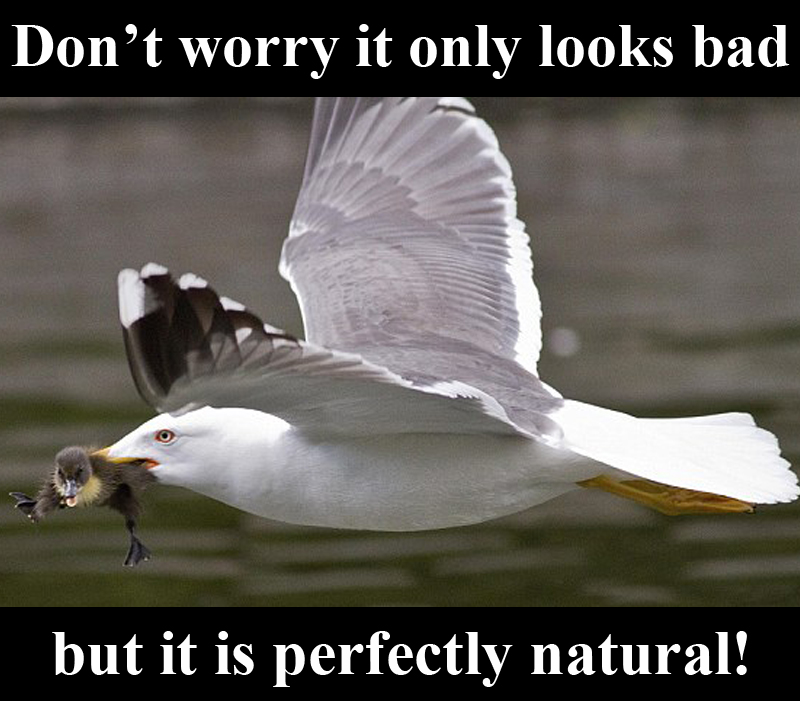 Perfectly_Natural