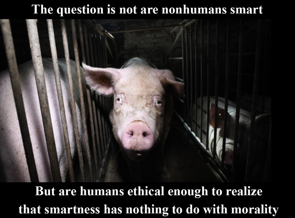 The_question_is_not_are_nonhumans_smart